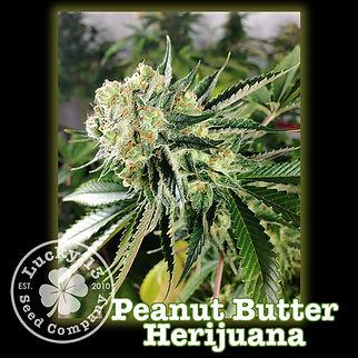 Peanut Butter HarijuanaNEW.jpg