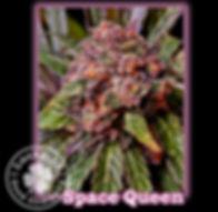 Space Queen, Lucky 13 Seeds.jpg