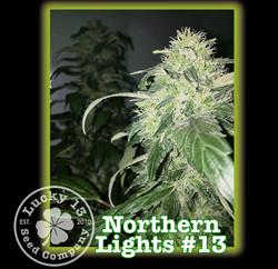 Northern Lights, Lucky 13 Seeds