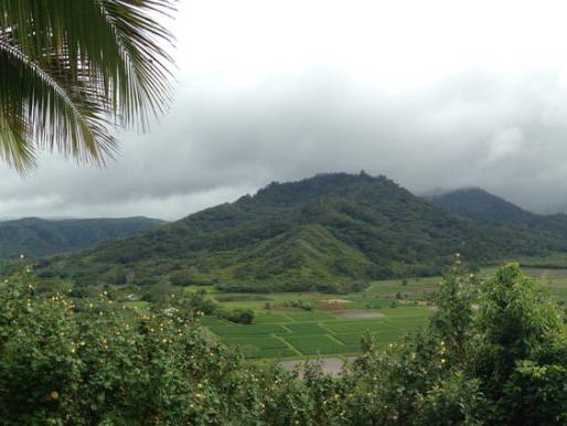 NEW STRAIN:  Hawaiian Puff