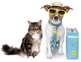 Traveling pets.jpg