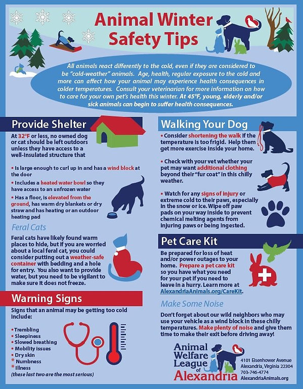 Cold-Weather-Winter-Safety-Tips-for-Pets