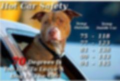 hot-car-safety-dog.jpg