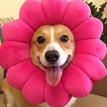 funny-dog-costume-flower-pink-1.jpg