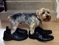 Top-10-Funny-Images-of-Dogs-in-Shoes-10.