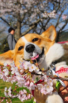 Dog w springtime flowers.jpg