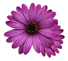flower-marigolds-3192686_960_720.webp