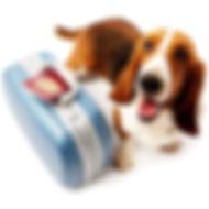 Traveling dog.jpg