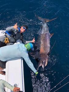 Black Marlin (500pound)