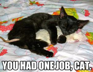 Funny pictures black kitten spooning white rat