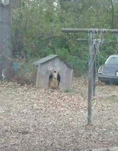 Funny pictures deer sitting in dog door of dog house