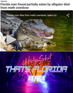 Funny pictures alligator in Florida dies of meth overdose news story