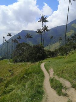 Vallée_del_Cocora