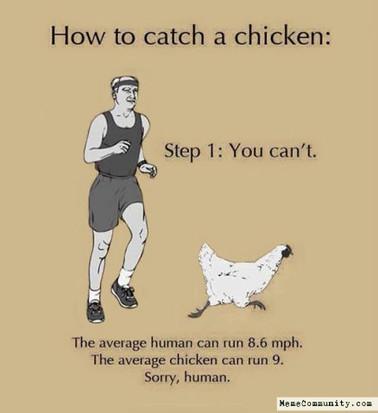 chicken truths