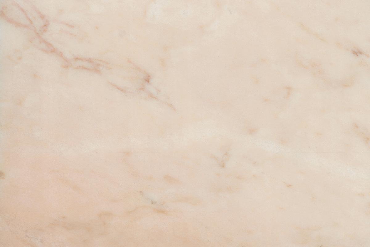 rosa portogallo standard
