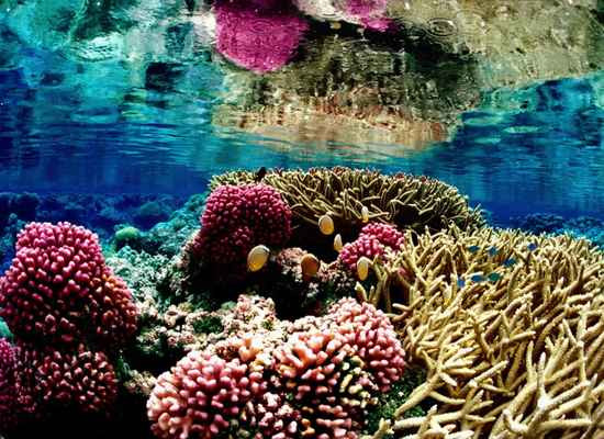 Foto de um recife de coral, contendo organismos de coloração amarronzada e avermelhada e alguns peixes.