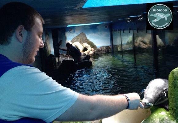 Homem dando comida no bico de um pinguim em ambiente artificial, com pedras e água sim