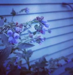 gardenflower