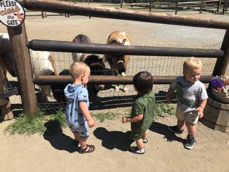 Playdate fun at the Sammamish Animal Sanctuary