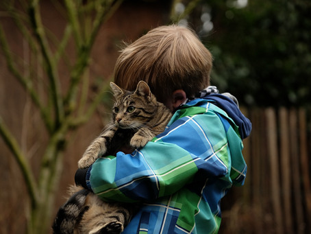 Introducing a New Pet to Your Kids, Home and Other Pets