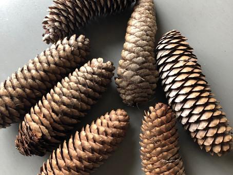 Spring Craft - Pinecone Bird Feeders