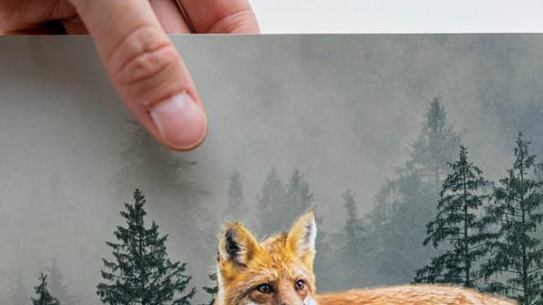 The Fox the Roof.jpg