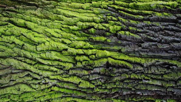 moss on tree bark.jpeg