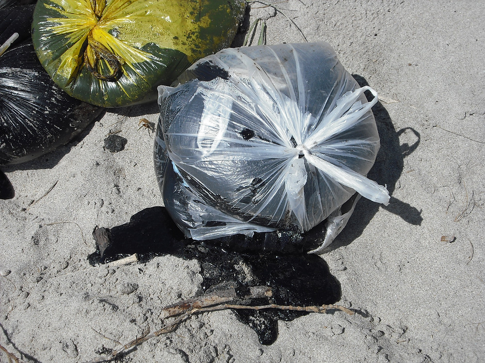 Pictured below are shopping bags of polluting  heavy ship oil scooped up off the popular Mt Maunganui beaches by volunteers.
