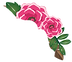 Flowers%252520-%252520no%252520backgroun