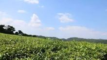 7 reasons why people love spring teas/       7 raisons pour lesquelles le thé printanier est le préf