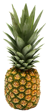 Pineapple-PNG-image-3.png
