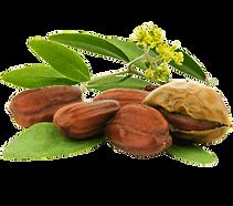 natural-oil-ingredient-jojoba-golden-see