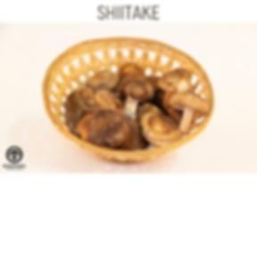 shiitake.png