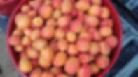 abrikoos.jpg