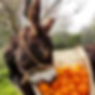 donkey-tour.png
