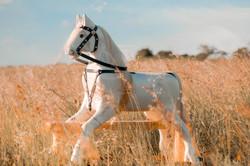 Boho Rocking Horse