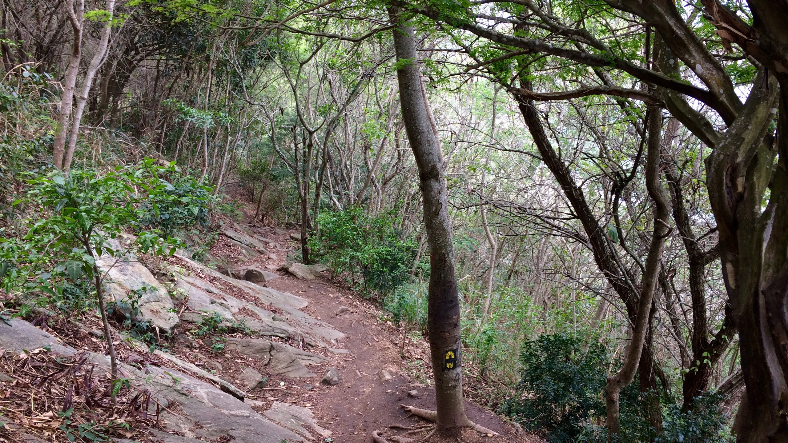 Trail near Guaratiba