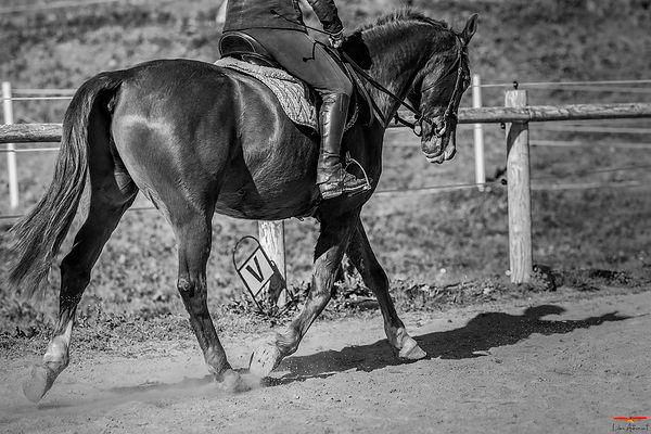 Equitation Corse Dressage