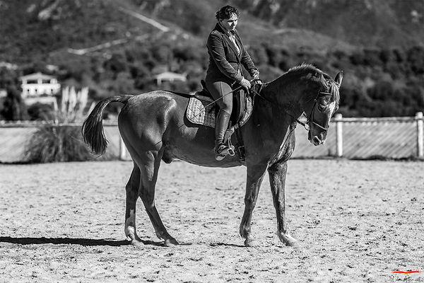Equitation dressage Corse