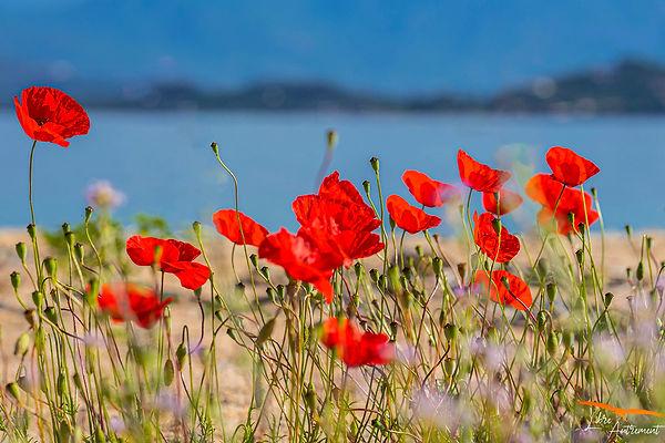Isolella - Corse du Sud