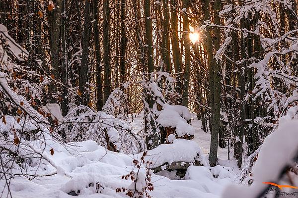 Vizzavona en hiver