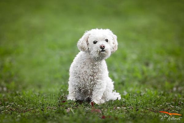 Photographe pour chien en Corse.jpg