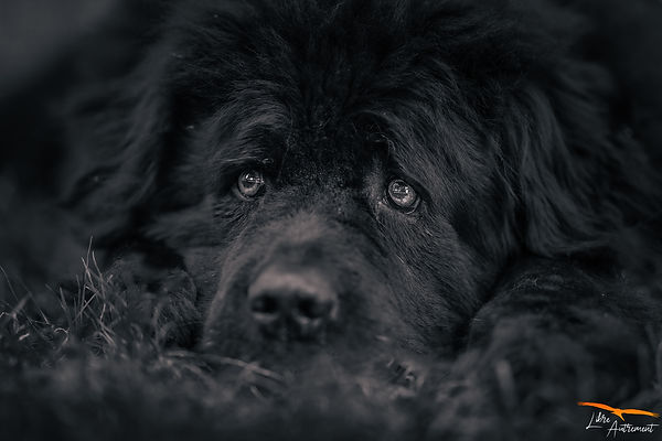 Photographe Animalier en Corse