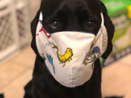 What It Is Like To Have A Service Dog During A Pandemic...