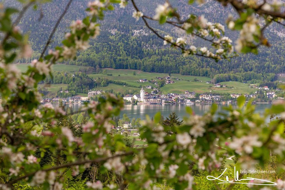 Frühling © Brigitte Leithner