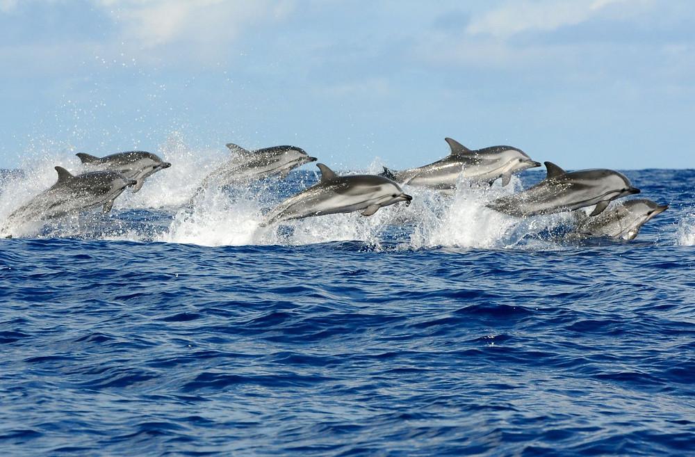 Dolphin bay, kizimkazi zanzibar
