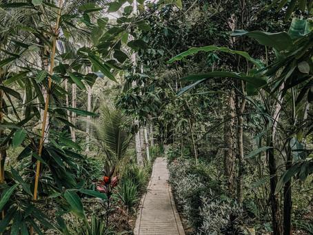 Una Passeggiata Nella Natura di Bali…