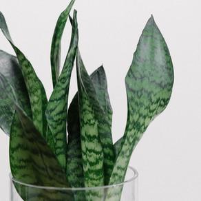Five easy houseplants