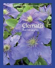 Clematis.jpg