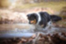Hundetrainer Heidelberg Hundeschule Heidelberg Hundetraining Heidelberg Hundetrainer Mannheim Hundeschule Mannheim Hundetraining Mannheim Hundeschule Ladenburg Hundetraining Ladenburg Hundetrainer Ladenburg
